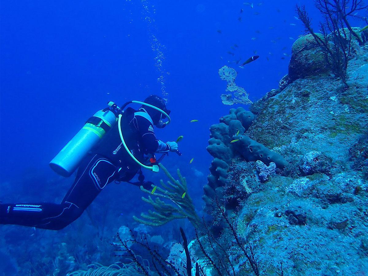 duiken, snorkelen, zwemmen met zeeschildpadden of walvissen spotten